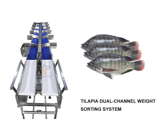 Dual Channel Tilapia Weight Sorting Machine 6 Level